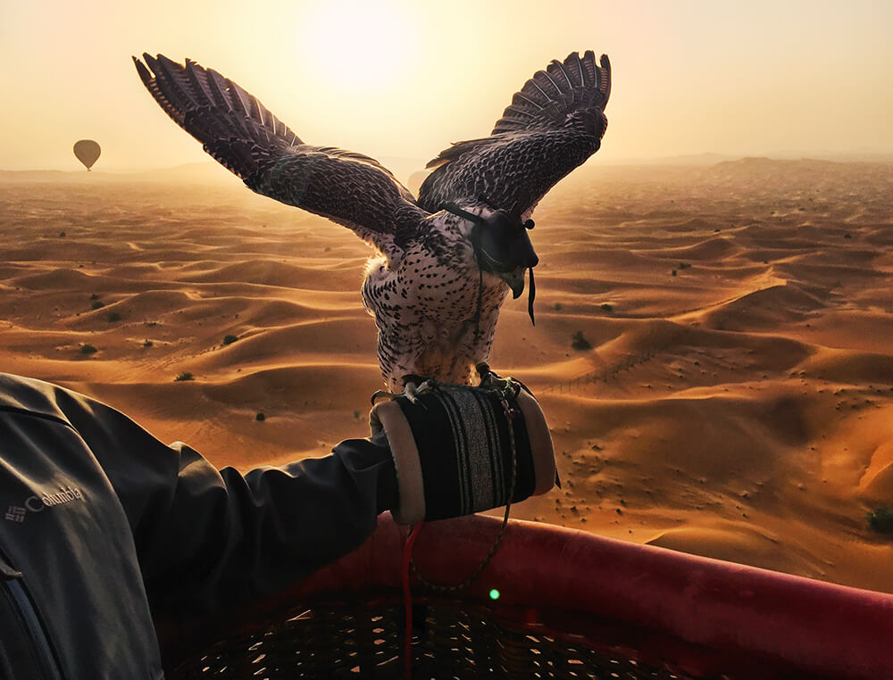 Hot Air Balloons and Falcons Dubai